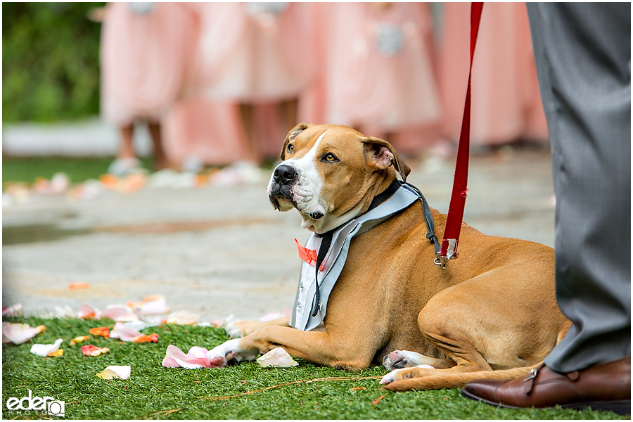 San Diego dog friendly wedding venue