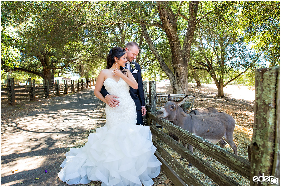 Vineyard Wedding bride and groom portraits with donkey.