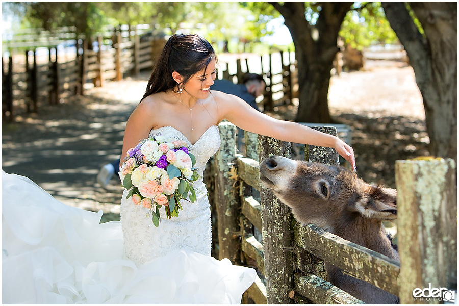 Vineyard Wedding bride portraits with donkey.